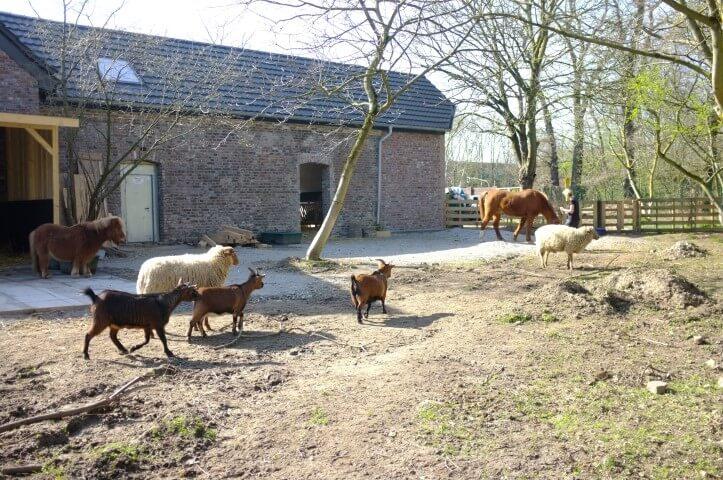 die kleine Herde