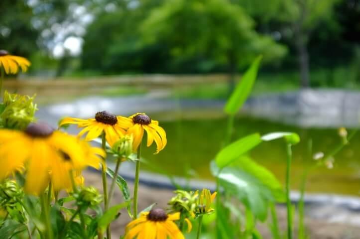 Aktuell wird der Teich bepflanzt