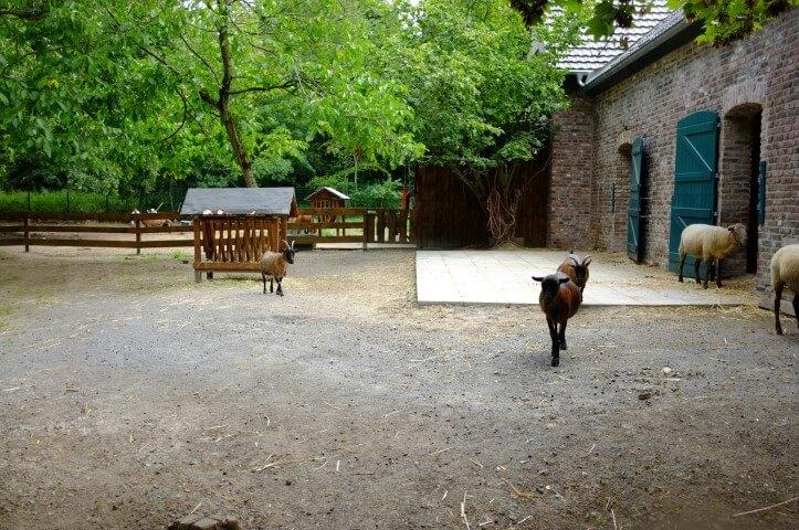 Hier ist Platz für ein Ziegen-Klettergerüst